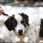Milka … μια παραδοσιακή μάρκα σοκολάτας